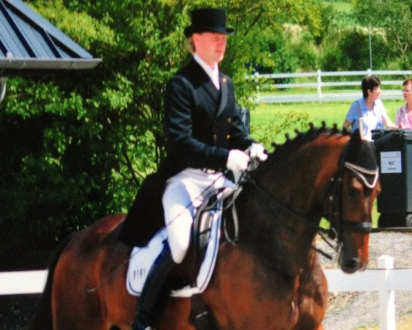dressage horse Sacento (Oldenburg, 2004, from Sion)