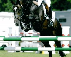 horse Now Or Never M (Royal Warmblood Studbook of the Netherlands (KWPN), 1995, from Voltaire)