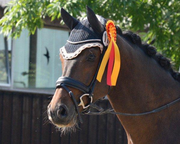 dressage horse Fratelino (Rhinelander, 2013, from Fürst Remus)
