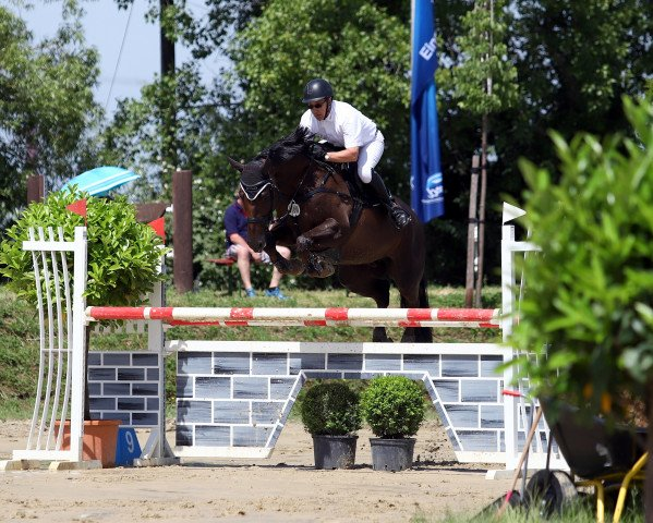 jumper Little rock 40 (German Sport Horse, 2013, from Light On)