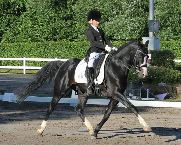 dressage horse Rm V-Power (German Riding Pony, 2009, from Valido's Highlight)
