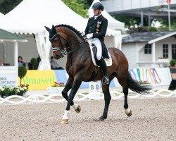 dressage horse Escolar (Westphalian, 2009, from Estobar NRW)