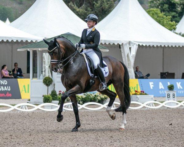 dressage horse DSP Quantaz (German Sport Horse, 2010, from Quaterback)