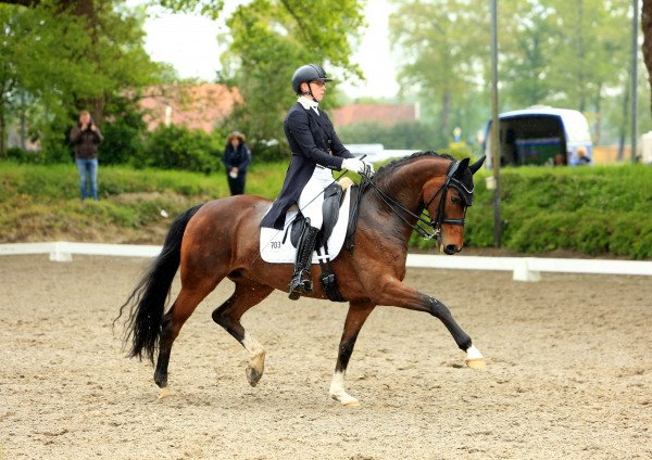 dressage horse S Rockyna (Westphalian, 2013, from Sir Donnerhall I)