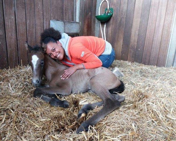 horse Captain Spaulding LM (Hanoverian, 2017, from Colestus)