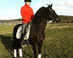dressage horse Da Vinci R (German Riding Pony, 1999, from Dakar)