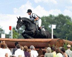 horse Grafenstolz (Trakehner, 1998, from Polarion)
