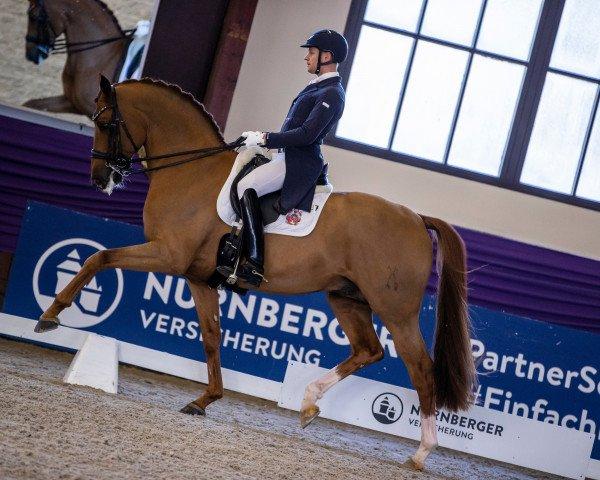 dressage horse Destacado FRH (Hanoverian, 2013, from Desperados 11)