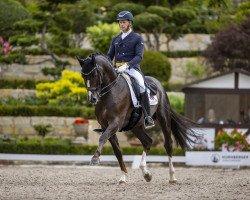 dressage horse Thiago Gs (Oldenburg, 2013, from Totilas)