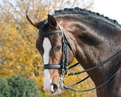 dressage horse Fürst Grandios (Oldenburg, 2002, from Fürst Heinrich)