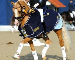 dressage horse Deinhard B (German Riding Pony, 1999, from Dornik B)