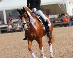 dressage horse Der Harlekin B (German Riding Pony, 2002, from Golden Dancer)