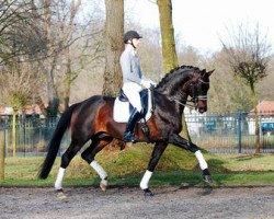 horse Samba Hit II (Brandenburg, 2002, from Sandro Hit)