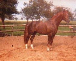 horse Argwohn I (Hanoverian, 1973, from Argus)