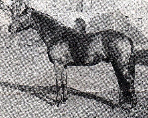 horse Marconi (Hanoverian, 1957, from Marcio xx)