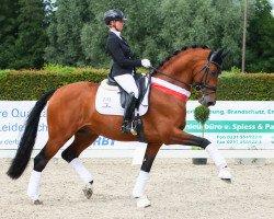 dressage horse Valverde NRW (Westphalian, 2014, from Vitalis)