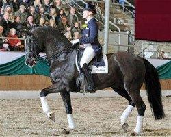 dressage horse De Niro (Hanoverian, 1993, from Donnerhall)