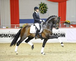 dressage horse Apache (Royal Warmblood Studbook of the Netherlands (KWPN), 2005, from UB 40)