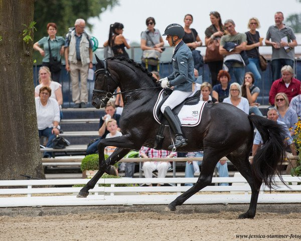dressage horse Revenant (Westphalian, 2012, from Rock Forever NRW)