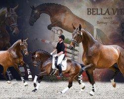 dressage horse Bella Vita 13 (Oldenburg, 2015, from Bernay)