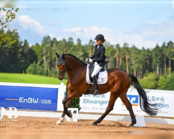 dressage horse Conspirito's Champ (Württemberger, 2013, from Con Spirito R)