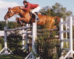horse Constant (Holsteiner, 1972, from Cor de la Bryère)