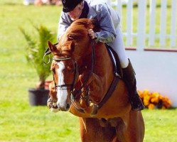 horse Tangelo van de Zuuthoeve (Belgian Warmblood, 1996, from Narcos II)