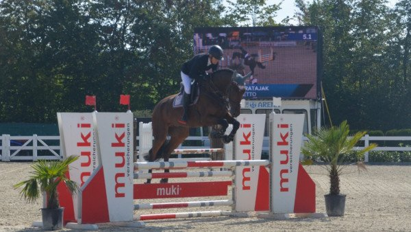 jumper Comoretto (German Sport Horse, 2014, from Cormint)