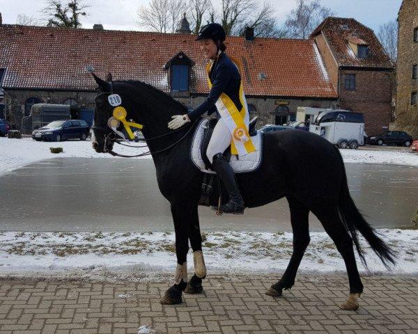 dressage horse Rosè de la Sol (Hanoverian, 2009, from Rascalino)