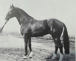 horse Grenadier (Hanoverian, 1974, from Grunewald)