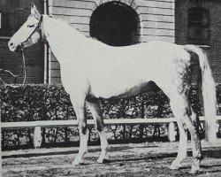 horse Greenhorn (Hanoverian, 1973, from Gotthard)