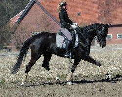 dressage horse Dark Rose WF (Westphalian, 2008, from Dancier)