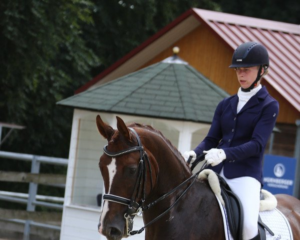 dressage horse Freek D'Arx (Oldenburg, 2011, from Floriscount)