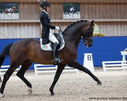 dressage horse Bordeaux 28 (Royal Warmblood Studbook of the Netherlands (KWPN), 2006, from United)