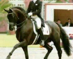 horse Rubinstein I (Westphalian, 1986, from Rosenkavalier)