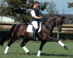 horse Rohdiamant (Oldenburg, 1990, from Rubinstein I)