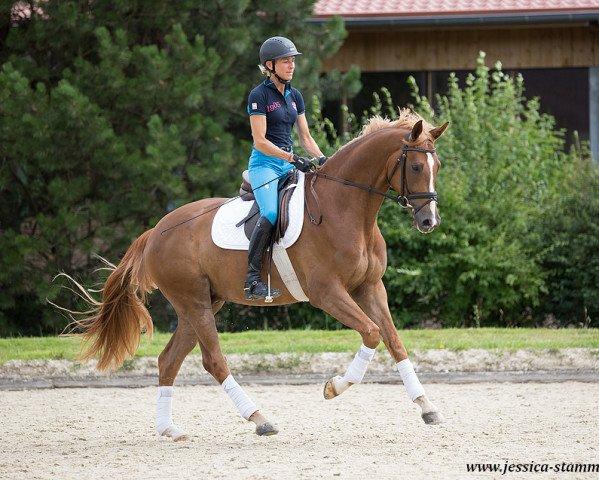 dressage horse EQUITANAs Firlefranz (Westphalian, 2013, from Franziskus 15)