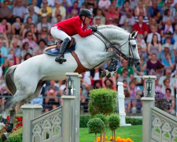 jumper Cicero Z van Paemel (Zangersheide riding horse, 2000, from Carthago)