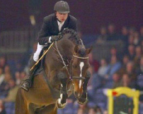 jumper Quasimodo Z (Zangersheide riding horse, 1999, from Quidam de Revel)