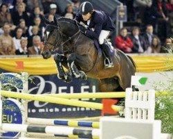 jumper Toulon (Belgian Warmblood, 1996, from Heartbreaker)