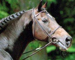 horse Landgraf I (Holsteiner, 1966, from Ladykiller xx)