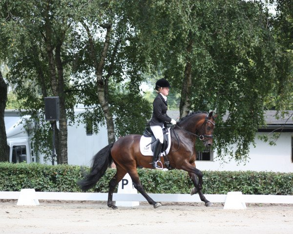 dressage horse Feivel K (German Riding Pony, 2010, from Folklore)