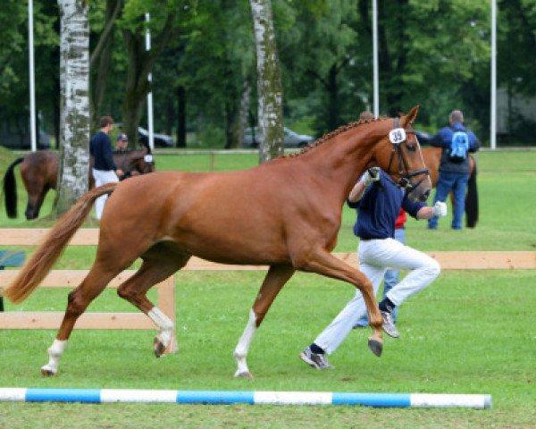 horse Ricarda (Bavarian, 2006, from Sir Donnerhall I)
