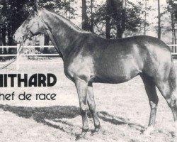 horse Nithard AA (Anglo-Arabs, 1948, from Kesbeth AA)