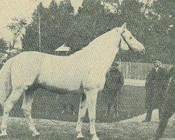 horse Shagya X-3 (Shagya Arabian, 1909, from Shagya X ShA)