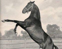 horse Wirbelwind xx (Thoroughbred, 1938, from Tourbillon xx)