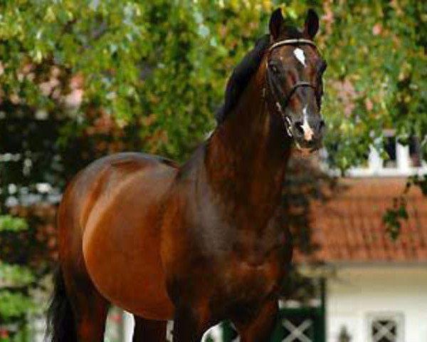 horse Caretino (Holsteiner, 1983, from Caletto II)