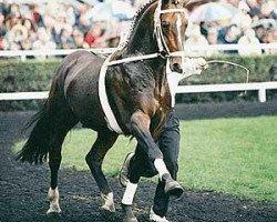 horse Falkland (Hanoverian, 1987, from Wanderer)