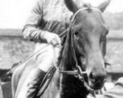 horse Straight Deal xx (Thoroughbred, 1940, from Solario xx)