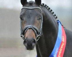 dressage horse For Romance OLD (Oldenburg, 2009, from Fürst Romancier)